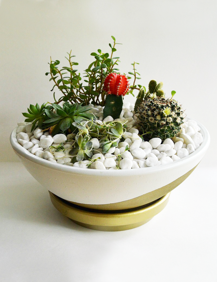 Easy DIY succelent cactus garden is low maintenance. A great way to add greenery and flowers to your home or garden. Low maintenance, hard to kill, can withstand heat with little watering.